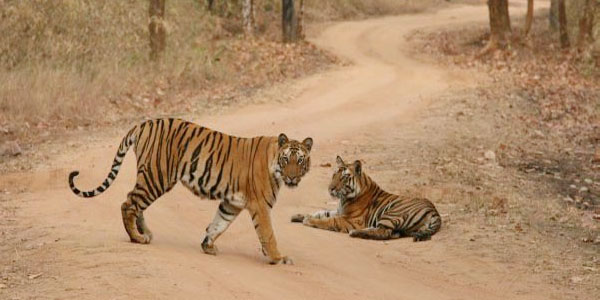 Bandhavgarh Madhya Pradesh