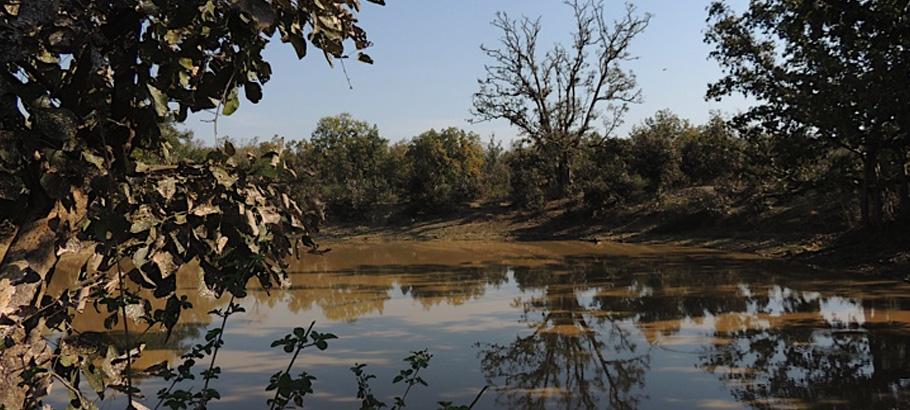 Bagh Tola in Bandhavgarh