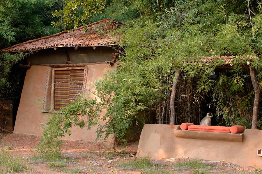 Mahua Kothi in Bandhavgarh