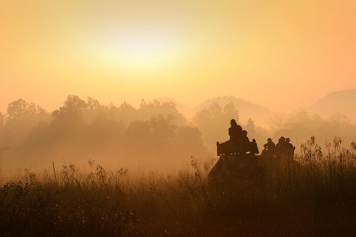 Bandhavgarh National Park Madhya Pradesh