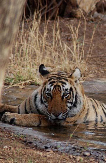 wildlife tour packages of madhya-pradesh