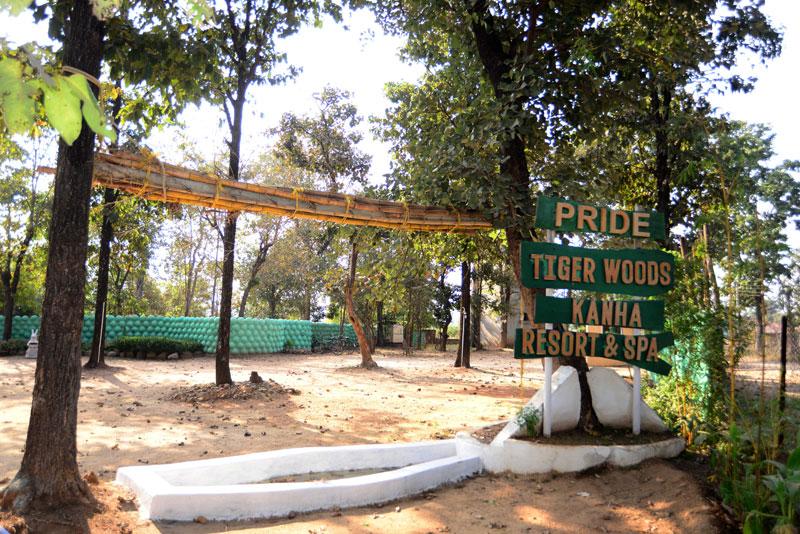 Tiger Woods Kanha
